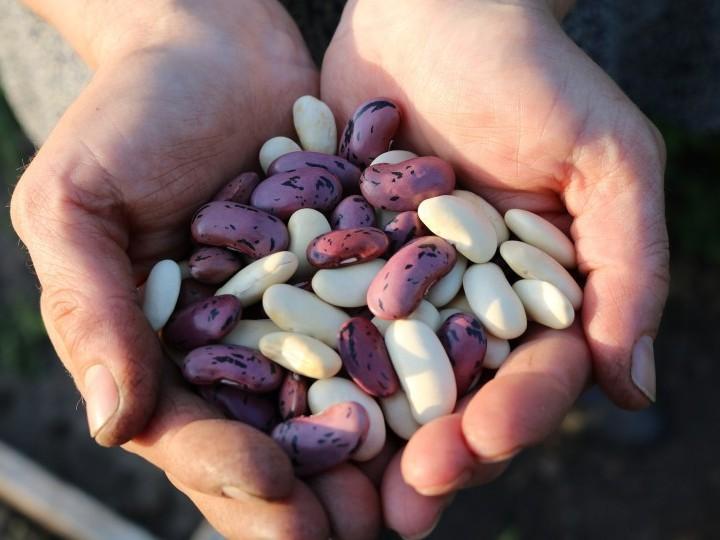 Oda a las legumbres